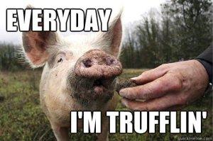 trufflepig